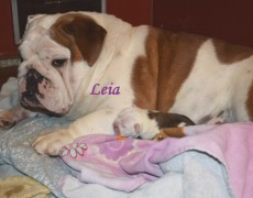 Leia – Mom
